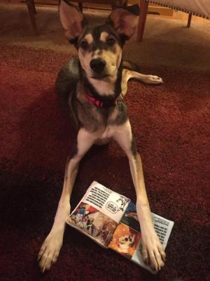 Buddy Fitzwilliam with his BarkBox toy (WildmooBooks)
