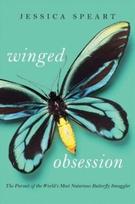 2011 winged obsession